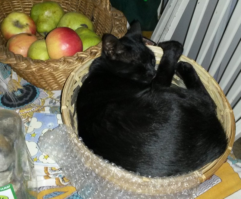 Black Fuzzy thing in a basket 5